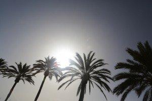 summer palm sky